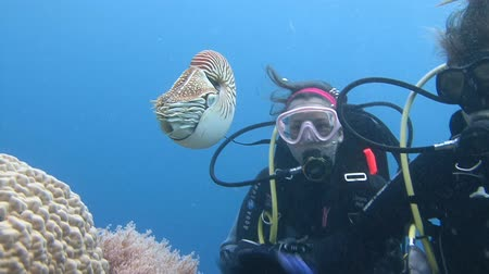 měkkýš : Diving on the reefs of the Palau archipelago. Great dive with amazing mollusks the Nautilus.