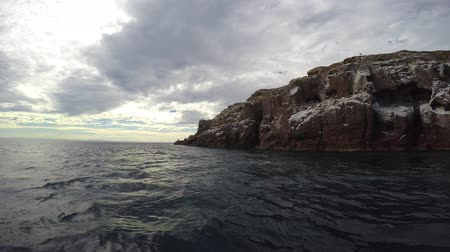 An exciting trip on the sea of Cortez. Mexico. Vídeos