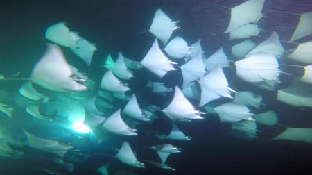 dips : Exciting night diving under water in the sea of Cortez. Mexico.