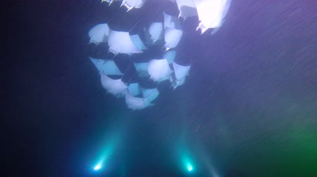 heyecan verici : Exciting night diving under water in the sea of Cortez. Mexico.
