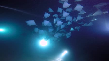 Exciting night diving under water in the sea of Cortez. Mexico.