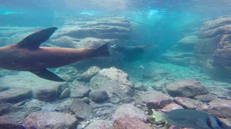 abyss : Fascinating underwater diving with sea lions in the sea of Cortez. Mexico.