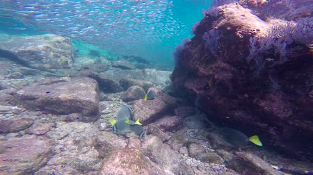 fejest ugrik : Fascinating scuba diving in the sea of cortez. Mexico.