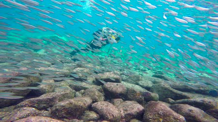 dips : Fascinating scuba diving in the sea of cortez. Mexico.