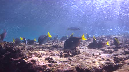 abyss : Fascinating scuba diving in the sea of cortez. Mexico.