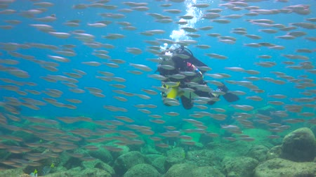 dips : Fascinating underwater diving in the sea of Cortez. Mexico.