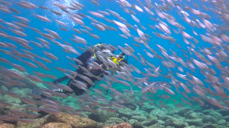 Fascinating underwater diving with sea in the sea of Cortez. Mexico.
