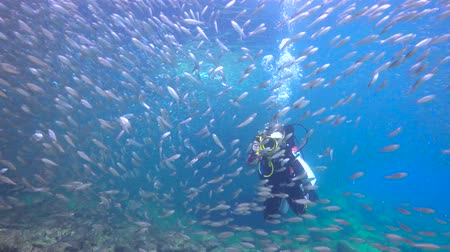 dips : Fascinating underwater diving with sea in the sea of Cortez. Mexico.