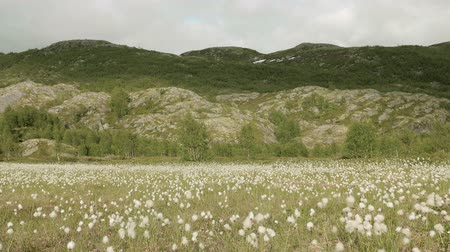 bavlna : Cotton field in the Norway Dostupné videozáznamy