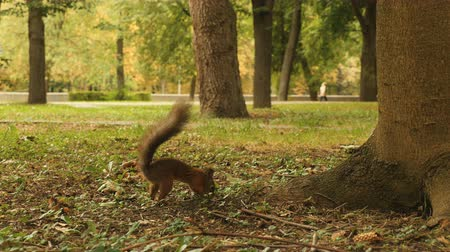 скрывать : Squirrel hides the Food in the Park