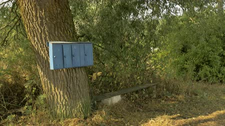 postacı : Mailboxes on a tree in a Russian village