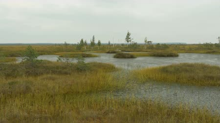 pântano : Islands in the swamp. Autumn daytime. Smooth dolly shot