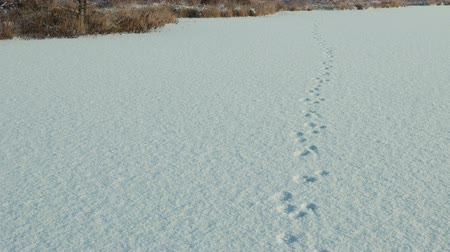 claw feet : Dog traces on the snow. Clean and frosty daytime. Smooth dolly shot