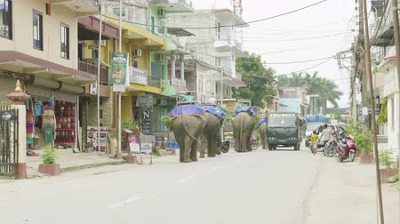 CHITWAN, NEPAL - MARCH, 2018: Asian elephants walk on the street in city.