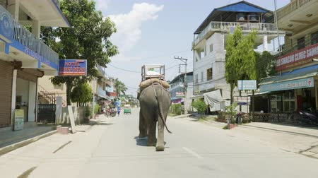 CHITWAN, NEPAL - MARCH, 2018: Asian elephant walks on the street in city. Stock Footage