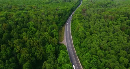 koşullar : Aerial view flying over road with car moving, that through lane green forest. Car driving along the forest road. AERIAL: Car driving through pine forest. Drone shot from above Stok Video