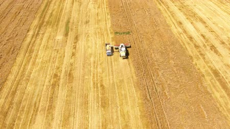 bales : Combine and truck Harvesting on weat field