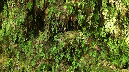 plash : A wall of a mountain with wet vegetation, dripping water and glares of sunlight in a sunny autumn day