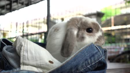 The rabbit are playing with jeans.