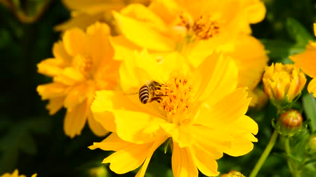 lanscape : Bee eating pollen from flower in the garden.