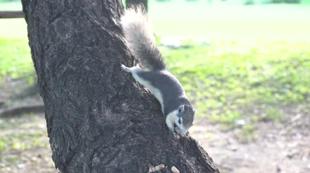 squirrel : The squirrel eat nut on the tree in the park.