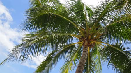 coconut palm tree : Coconut palm tree on Beautiful Tropical beach and sky