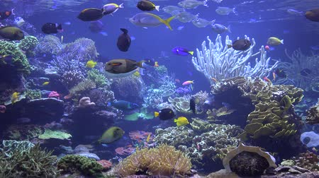 chaluha : Aquarium, Fish Tank, Marine Animals