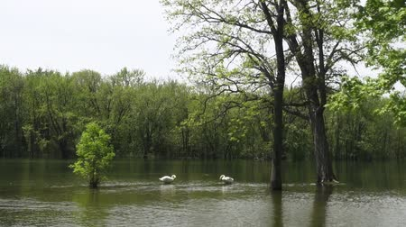 floods : Public Park, Flooding, Floods, Rainwater Stock Footage