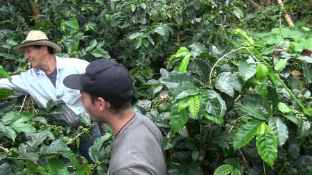 rolnik : Coffee Farmer, Worker, Plantation, Nature