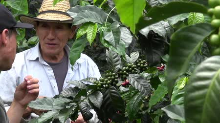 plantio : Coffee Farmer, Worker, Plantation, Nature