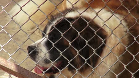 sorry : Lonely Caged Dogs, Canines, Neglect, Abuse Stock Footage