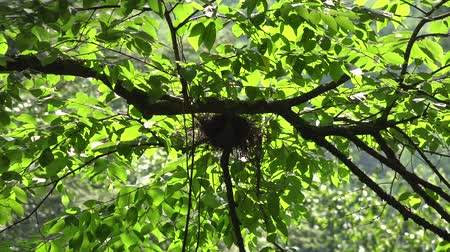 eko : Nest, Trees, Habitat, Ecology Wideo