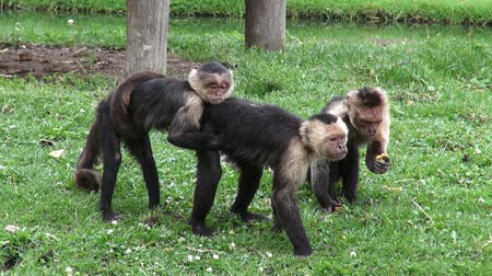 abuso : Monkeys, Primates, Zoo Animals, Wildlife, Nature