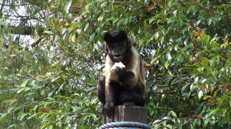 descamação : Monkeys Eating, Primates, Zoo Animals, Wildlife, Nature