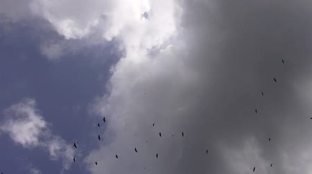 mennyiség : Flock of Birds, Animals, Nature, Sky