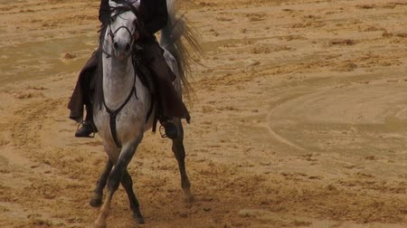 abuso : Horseback Riding, Horses, Animals Stock Footage