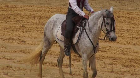 pónei : Horseback Riding, Horses, Animals Stock Footage
