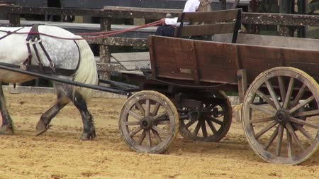 koń : Horse Drawn Carriage, Wild West, Settlers