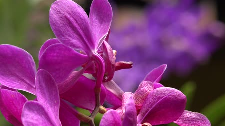 margarida : Pink Flowers, Flowering Plants, Nature