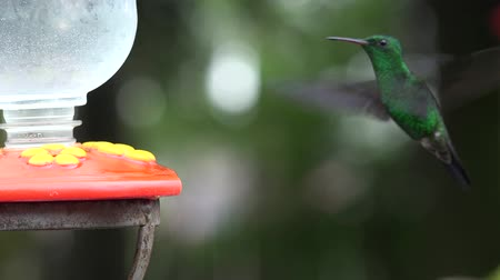 vida selvagem : Hummingbirds, Birds, Animals, Wild Life, Nature