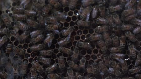 hive : Bees, Insects, Animals, Wildlife, Nature