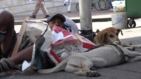 andarilho : Homeless man with stray dogs