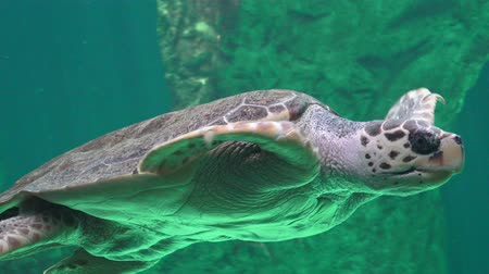 vivo : Sea Turtle And Other Marine Animals Stock Footage