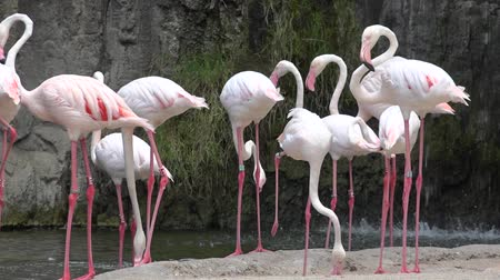 fuksja : Pink Flamingos In Wild