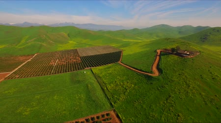 irrigate : Farm Lands Pears Peach Apples Orange Fields Mountains Bakersfields California Wide Aerial Moving Forward Evening Sunset Stock Footage