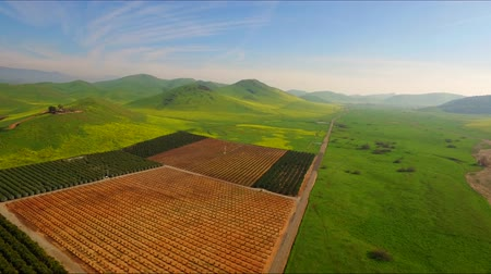 земледелие : Farm Lands Pears Peach Apples Orange Fields Mountains Bakersfields California Wide Aerial Moving Forward Evening Sunset Стоковые видеозаписи
