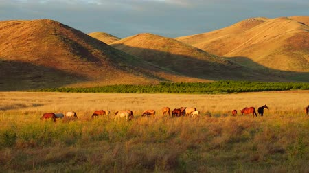 idaho : Eating Horses Pasturing on Farm Land With Mountains Aerial Wide Angle