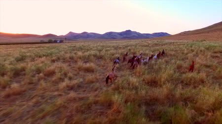 cavalos : Wild Horses Running Full Speed Farm Country Side