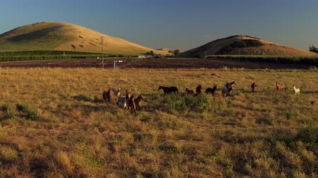 idaho : Horses On a Country Farm Morning Aerial View Morning Light Stock Footage