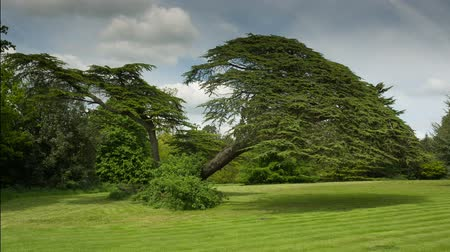 wood : beautiful tree in an english countryside meadow during summer. This is shot with 14bit raw video from canons 5d mk3